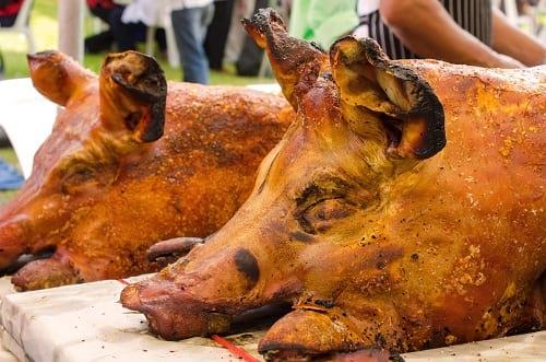 Roast Pigs